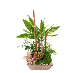 Assemblage de plantes
