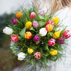 Nos charmantes tulipes