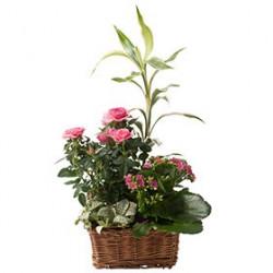 Plante fleurie